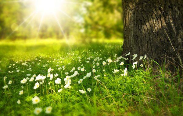 Biologische bestrijding is een goede oplossing voor in elke tuin